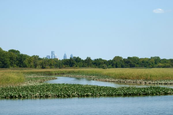 A view of the Philadelphia skyline rises above the treeline at John Heinz National Wildlife Refuge at Tinicum.